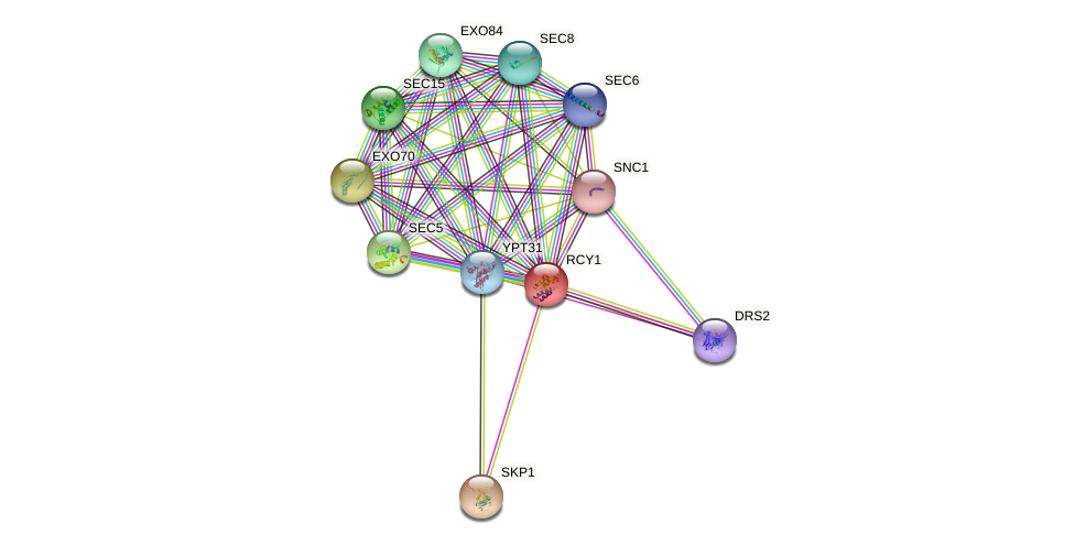 RCY1 protein (Saccharomyces cerevisiae) - STRING interaction network