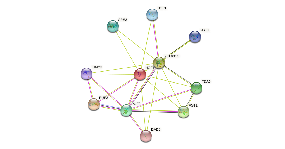 NCE101 protein (Saccharomyces cerevisiae) - STRING interaction network