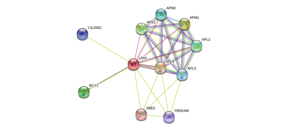 LAA1 protein (Saccharomyces cerevisiae) - STRING interaction network