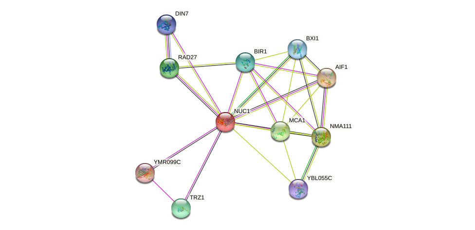 NUC1 protein (Saccharomyces cerevisiae) - STRING interaction network