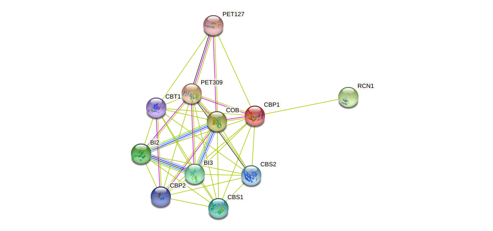 CBP1 protein (Saccharomyces cerevisiae) - STRING interaction network