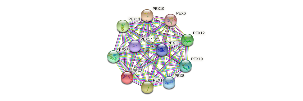 PEX2 protein (Saccharomyces cerevisiae) - STRING interaction network