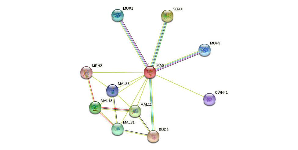 IMA5 protein (Saccharomyces cerevisiae) - STRING interaction network