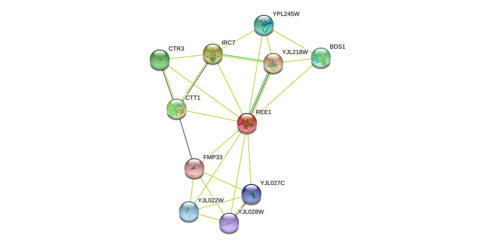 REE1 protein (Saccharomyces cerevisiae) - STRING interaction network