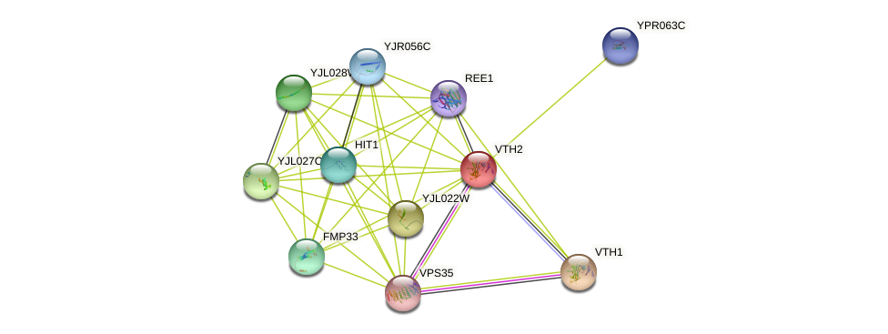 VTH2 protein (Saccharomyces cerevisiae) - STRING interaction network