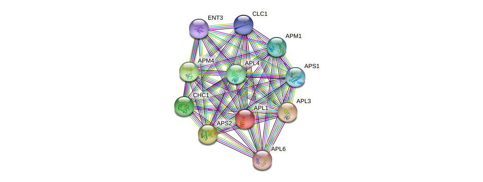 APL1 protein (Saccharomyces cerevisiae) - STRING interaction network