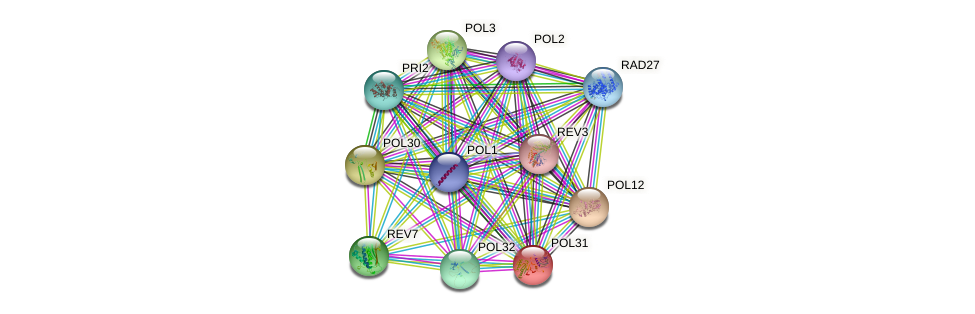 POL31 protein (Saccharomyces cerevisiae) - STRING interaction network