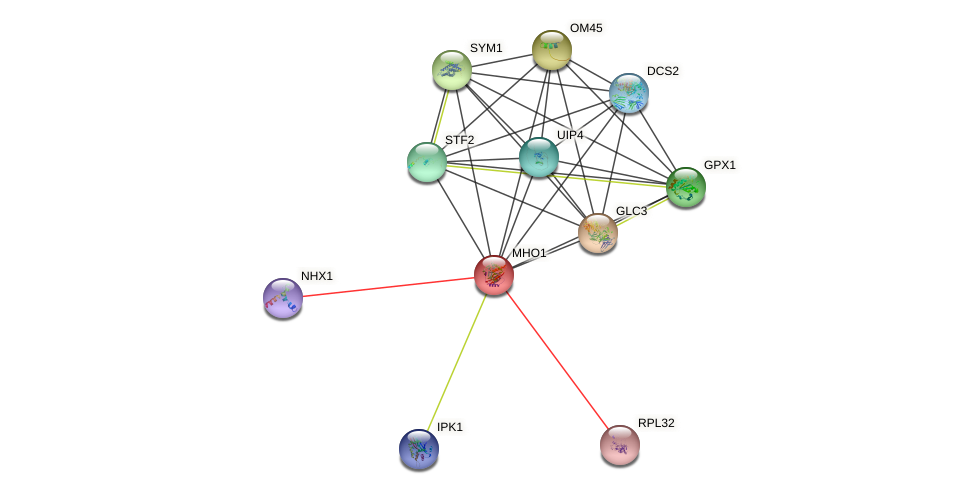 MHO1 protein (Saccharomyces cerevisiae) - STRING interaction network