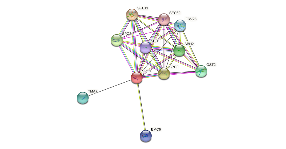 SPC1 protein (Saccharomyces cerevisiae) - STRING interaction network
