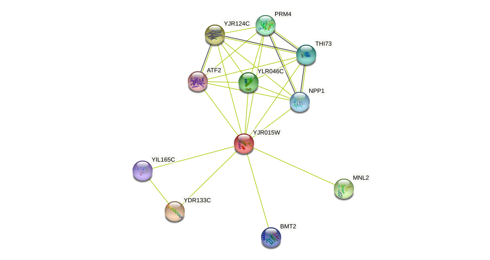 YJR015W protein (Saccharomyces cerevisiae) - STRING interaction network