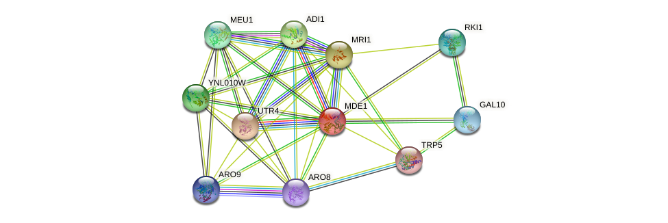 MDE1 protein (Saccharomyces cerevisiae) - STRING interaction network