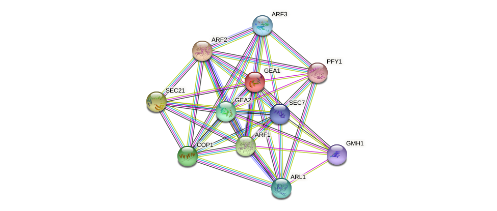 GEA1 protein (Saccharomyces cerevisiae) - STRING interaction network