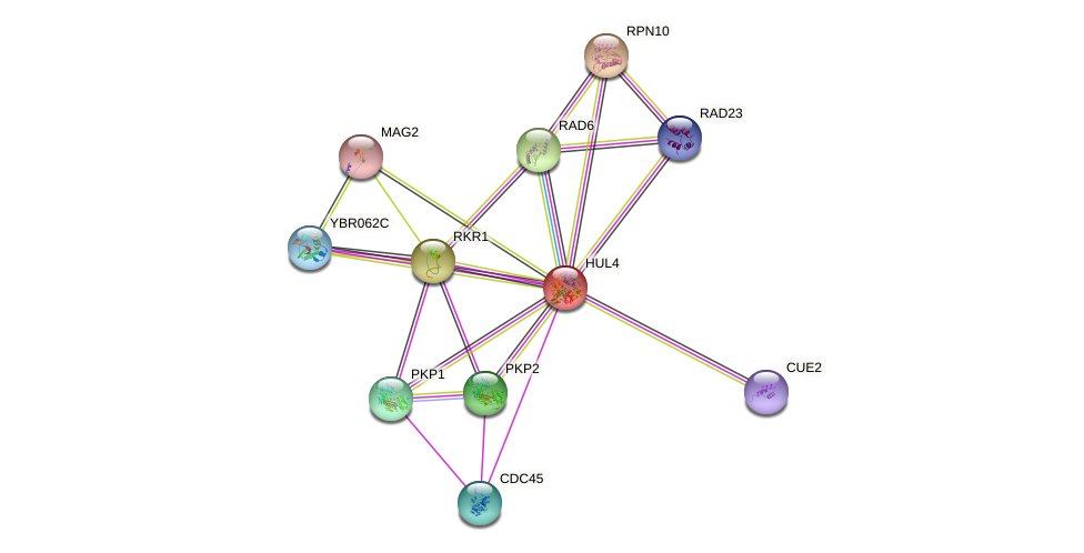 HUL4 protein (Saccharomyces cerevisiae) - STRING interaction network