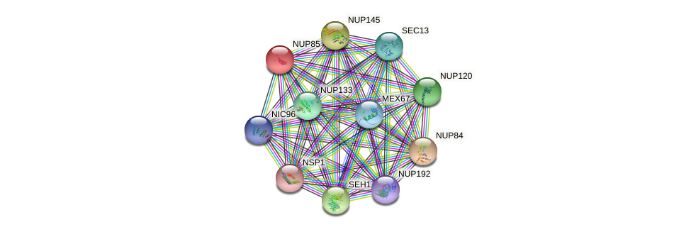 NUP85 protein (Saccharomyces cerevisiae) - STRING interaction network