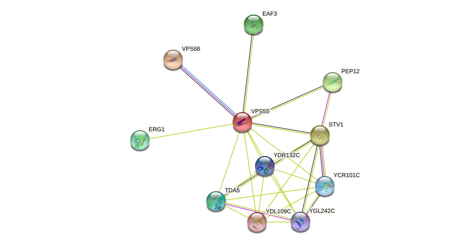 VPS55 protein (Saccharomyces cerevisiae) - STRING interaction network
