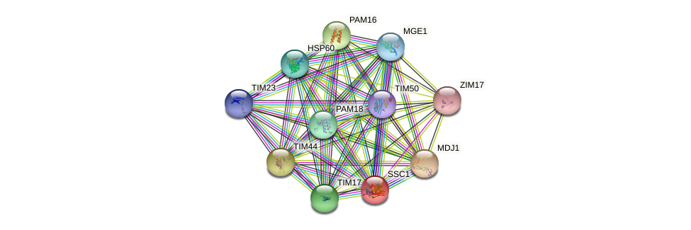 SSC1 protein (Saccharomyces cerevisiae) - STRING interaction network
