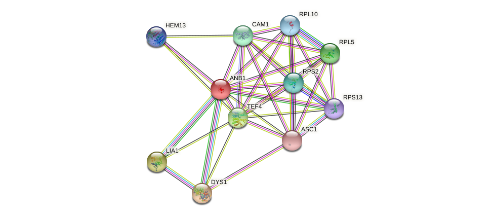 ANB1 protein (Saccharomyces cerevisiae) - STRING interaction network