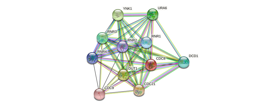 CDC8 protein (Saccharomyces cerevisiae) - STRING interaction network