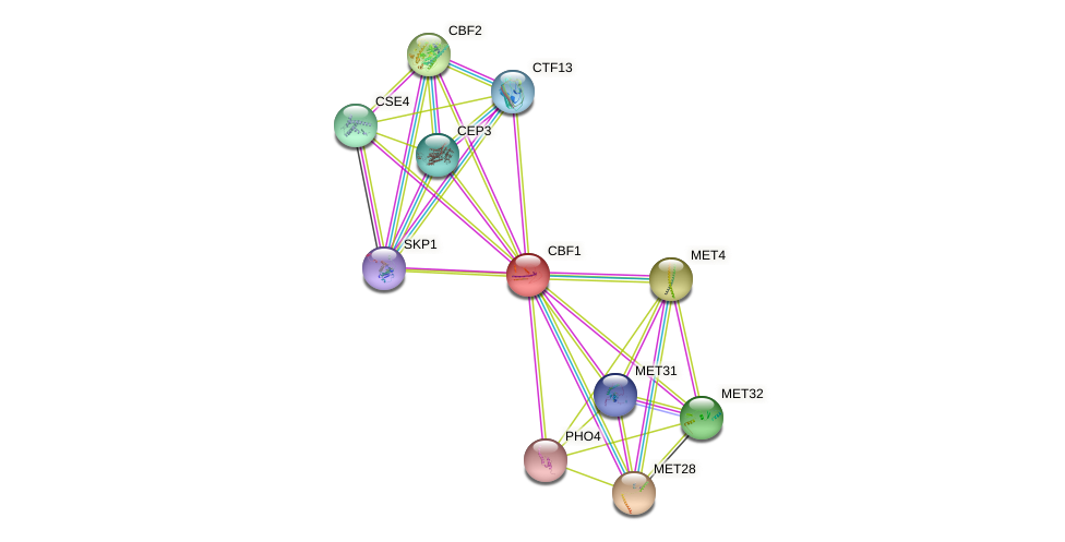 CBF1 protein (Saccharomyces cerevisiae) - STRING interaction network