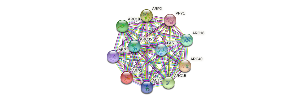 ARP3 protein (Saccharomyces cerevisiae) - STRING interaction network