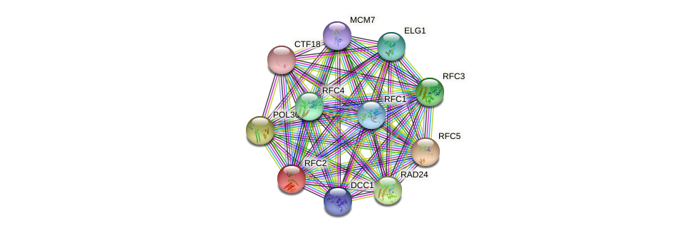 RFC2 protein (Saccharomyces cerevisiae) - STRING interaction network