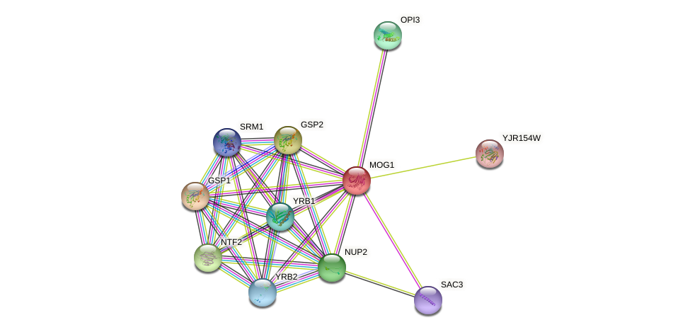 MOG1 protein (Saccharomyces cerevisiae) - STRING interaction network