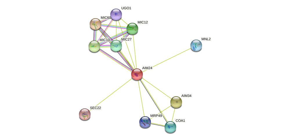 AIM24 protein (Saccharomyces cerevisiae) - STRING interaction network