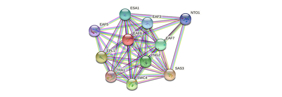 EAF6 protein (Saccharomyces cerevisiae) - STRING interaction network
