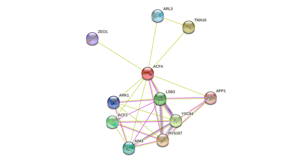 ACF4 protein (Saccharomyces cerevisiae) - STRING interaction network