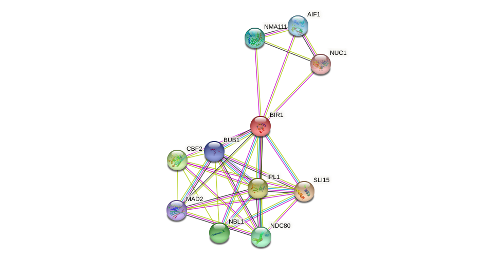 BIR1 protein (Saccharomyces cerevisiae) - STRING interaction network