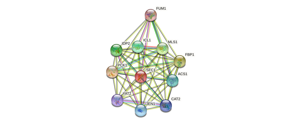 SFC1 protein (Saccharomyces cerevisiae) - STRING interaction network