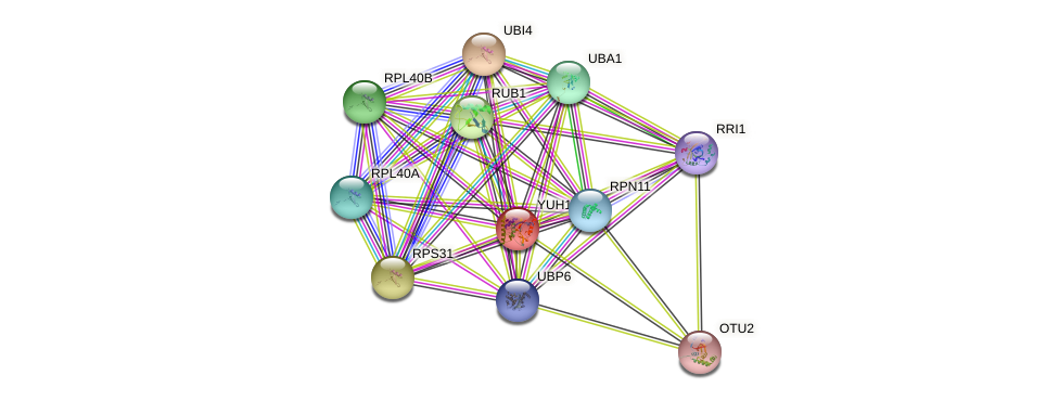 YUH1 protein (Saccharomyces cerevisiae) - STRING interaction network