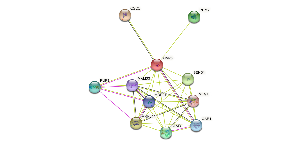AIM25 protein (Saccharomyces cerevisiae) - STRING interaction network