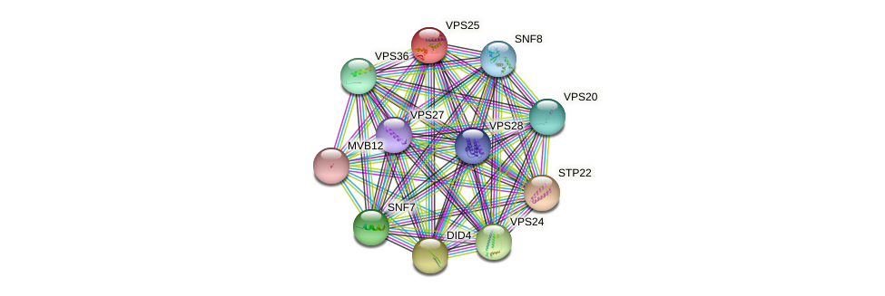 VPS25 protein (Saccharomyces cerevisiae) - STRING interaction network