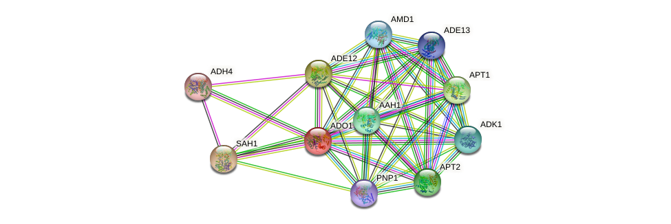 ADO1 protein (Saccharomyces cerevisiae) - STRING interaction network