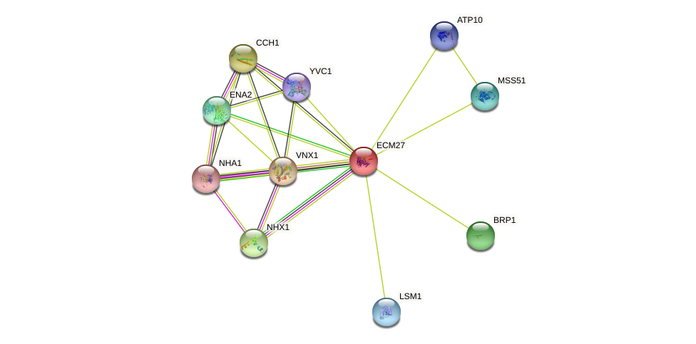 ECM27 protein (Saccharomyces cerevisiae) - STRING interaction network