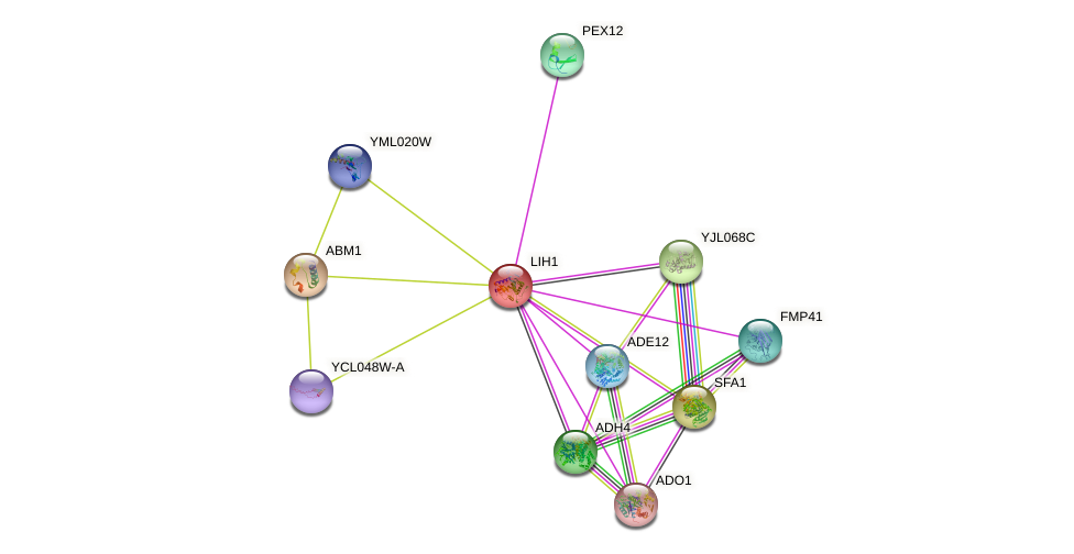 LIH1 protein (Saccharomyces cerevisiae) - STRING interaction network