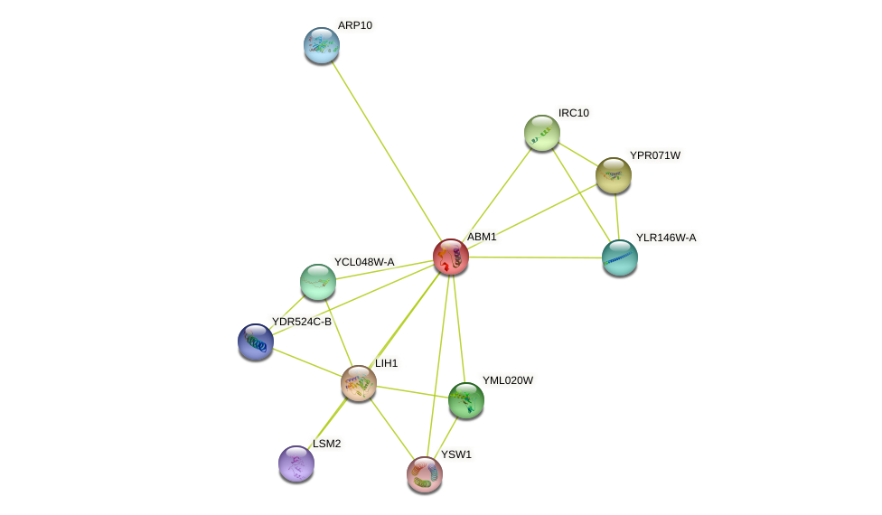 ABM1 protein (Saccharomyces cerevisiae) - STRING interaction network