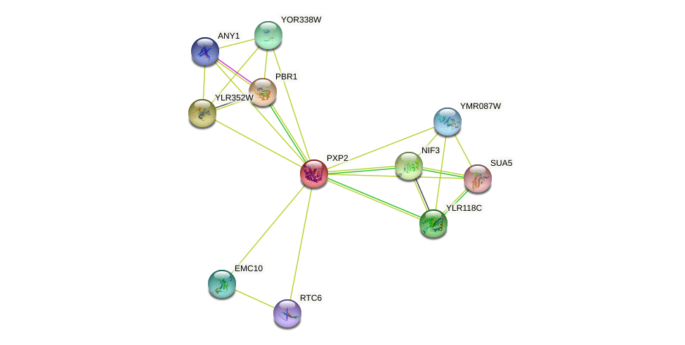 YJR111C protein (Saccharomyces cerevisiae) - STRING interaction network