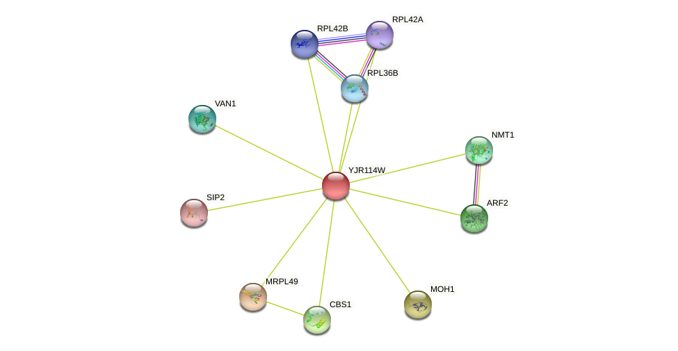 YJR114W protein (Saccharomyces cerevisiae) - STRING interaction network