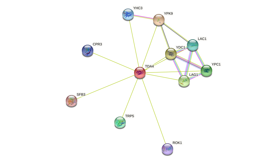 TDA4 protein (Saccharomyces cerevisiae) - STRING interaction network