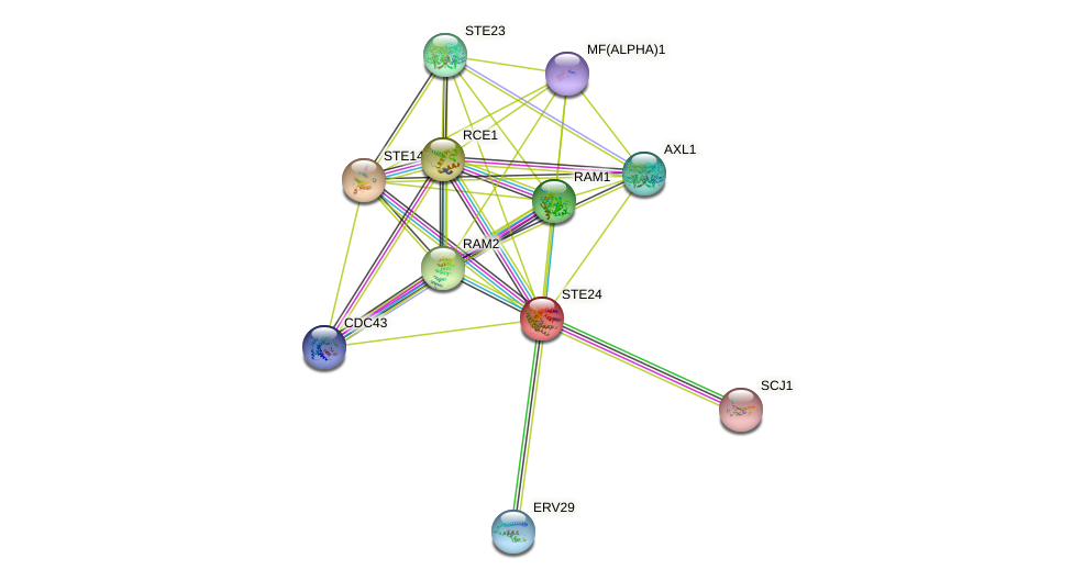 STE24 protein (Saccharomyces cerevisiae) - STRING interaction network