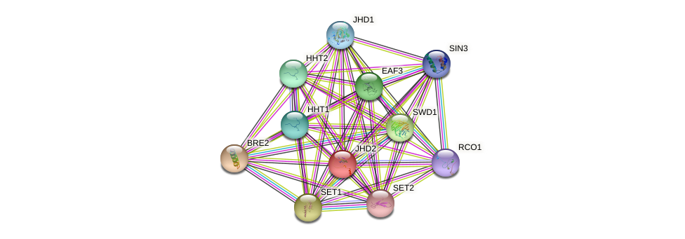 JHD2 protein (Saccharomyces cerevisiae) - STRING interaction network
