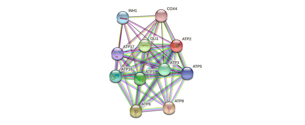 ATP2 protein (Saccharomyces cerevisiae) - STRING interaction network