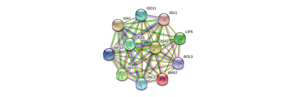 IBA57 protein (Saccharomyces cerevisiae) - STRING interaction network