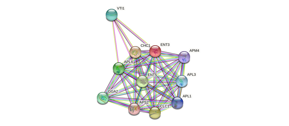 ENT3 protein (Saccharomyces cerevisiae) - STRING interaction network