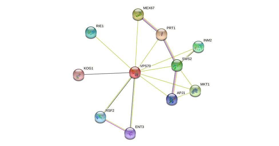 VPS70 protein (Saccharomyces cerevisiae) - STRING interaction network
