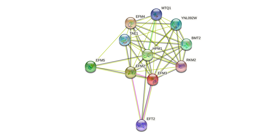 EFM3 protein (Saccharomyces cerevisiae) - STRING interaction network