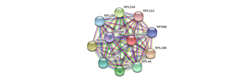 RPS4A protein (Saccharomyces cerevisiae) - STRING interaction network