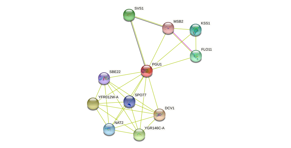 PGU1 protein (Saccharomyces cerevisiae) - STRING interaction network